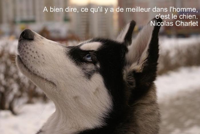 Citations Chiens Le Blog De Benissa
