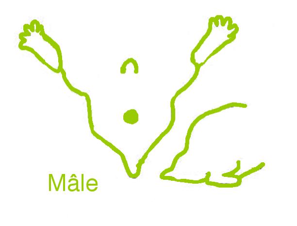 pieds de sexe hamster sexe